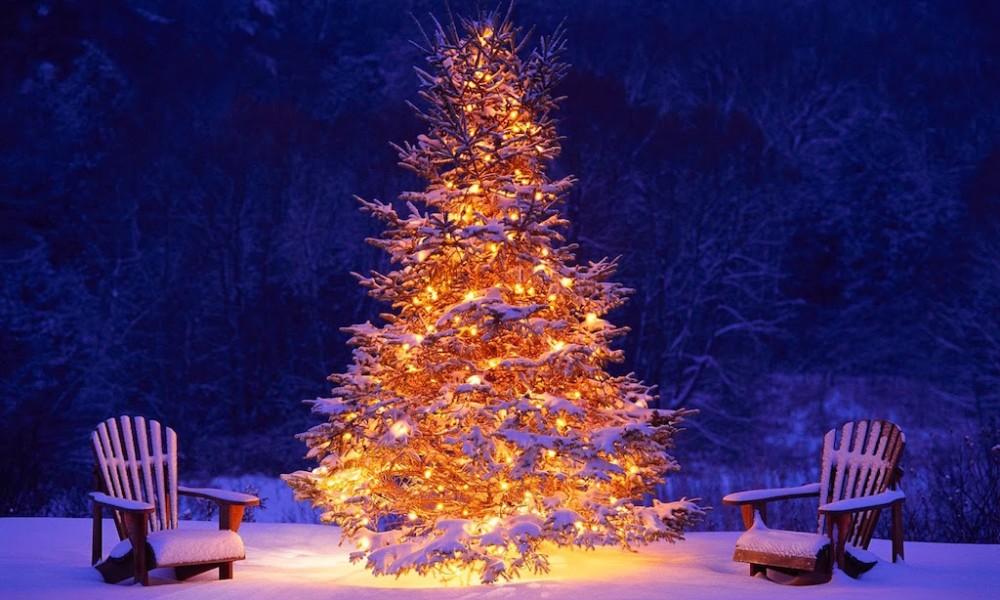 Ankündigung Weihnachtsfeier und Gürtelprüfung